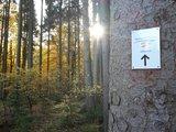 thumbnail - Wegweiser im Wald