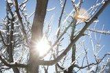 thumbnail - Winter auf der Zollernalb