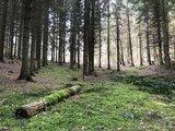 thumbnail - Wald bei Ralswiek.
