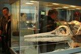 thumbnail - Fossilienmuseum im Werkforum