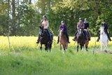 thumbnail - Auf dem Pferderücken durch die Natur