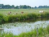 thumbnail -  Kanäle und grüne Weiden soweit das Auge reicht. Sie prägen das Bild der Fehnlandschaft