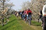 thumbnail - Radfahrer auf dem Este-Deich bei Buxtehude