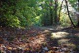 thumbnail - Waldweg in der Göhrde