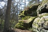 thumbnail - Isterberger Wald
