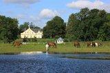 thumbnail - Pferde grasen vor dem Feriengut Dalwitz
