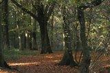 thumbnail - Der Wald
