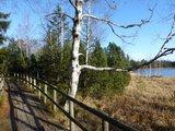 thumbnail - Das Wildsee.Moor und der Bohlenweg auf teilweise alten Eisenbahnschwellen