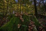 thumbnail - Im Herbst auf dem Eibenkopf