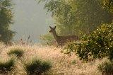 thumbnail - Im Diersfordter Wald