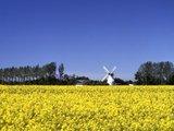 thumbnail - Mühle Betty in Lüdingworth, Cuxland, Rennradregion