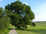 thumbnail - Eiche In Stockahausen Naturdenkmal