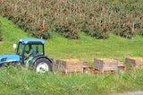 thumbnail - Apfeltrecker bei der Apfelernte im Alten Land am Elbstrom -