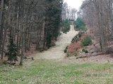 thumbnail - Blick durch den Wald