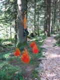 thumbnail - Einstieg Feuerwehrwegle Kniebis