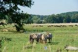 thumbnail - Pferde und Kühe entlang des Mühlenwanderwegs