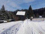 thumbnail - Hahnenhäuser Schnarrtanne im Winter