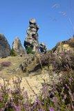 thumbnail - Blühende Heide an der Teufelsmauer