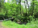 thumbnail - Trails bei Altenau