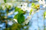 thumbnail - Der Ort Hagen ist vor allem für seine vielen Kirschbäume bekannt. Wenn man im Frühjahr die richtige Woche für seine Radtour erwischt, kann man die ganze Blütenpracht erleben.