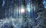 thumbnail - Winter im Vogtland