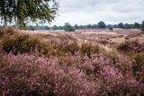 thumbnail - Nemitzer Heide