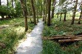 thumbnail - Waldstück auf dem Wanderweg Ooler Schoolpad
