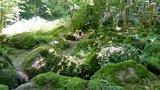 thumbnail - Am wilden Sasbach entlang über moosbewachsene Felsen