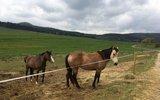 thumbnail - Koppel der Ponde Rosa Ranch