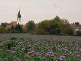 thumbnail - Dorfkirche in Freisbach