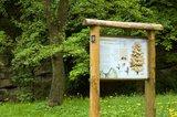 thumbnail - Info-Tafel am Gingko-Baum im Arboretum Bad Driburg