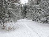 thumbnail - Pfad im Schnee