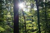 thumbnail - blitzende Sonne
