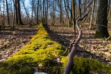 thumbnail - Moos im Dornheimer Wald