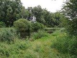 thumbnail - Landschaft an der Recknitz