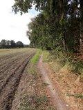 thumbnail - Der Wanderweg führt auf schmalen Pfaden am Waldrand entlang.