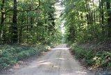 thumbnail - Schleifenroute - Hallaliter Forst