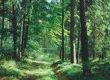 thumbnail - Paintner Forst