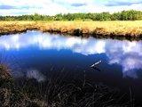 thumbnail - Blick über eine Wasserfläche im Emsdettener Venn.