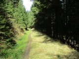 thumbnail - Tolle Single-Trails um Wildemann