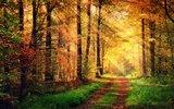 thumbnail - schöner Herbst