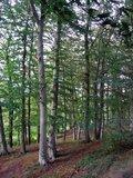 thumbnail - Schleifenroute - Buchenwald