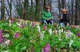 thumbnail - Kleine Rast am Blütenmeer