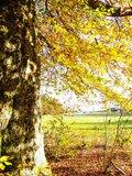 thumbnail - Rennsteig Herbst