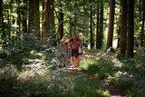 thumbnail - TraumRunde Dornheim, Waldwanderweg