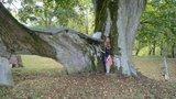thumbnail - Hoflinde|Naturdenkmal am Allenpacher Hof