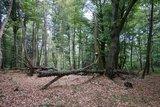 thumbnail - Naturbelassene Waldstücke im Naturschutzgebiet