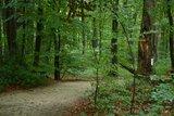 thumbnail - Bentheimer Wald