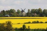 thumbnail - Windmühle Syrau