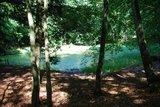 thumbnail - Weiher im Wald